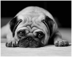The dog of my dream *_*