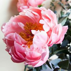How to Plant Potted Flowers Outdoors in the Soil : Garden Space – Top Soop Peony Flower, Flower Art, Sugar Flowers, Pink Flowers, Peony Painting, Flower Pictures, Pink Peonies, Magnolia, Planting Flowers