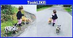 มันคงจะเป็นภาพที่น่ารักที่สุดสำหรับคนรักหมาและคนทั่วไป …  - #คลิปดัง #คลิปฮิต #เรื่องเด่น #เรื่องดัง #วิดีโอคลิป #รูปภาพ #เรื่องราวน่าสนใจ