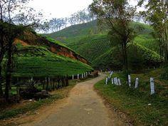 Munnar indian beauty