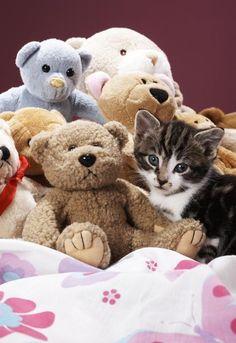 Stuffed Animal Birthday Party Games