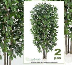 TWO 7 Extra Full Ficus Real Wood Trunks Artificial Trees Silk Plants -- Continue to the product at the image link.