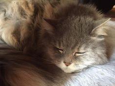 愛猫さくら姫 SHOOP+FACTORY(シュープ・ファクトリー)@オーナーブログ-8ページ目