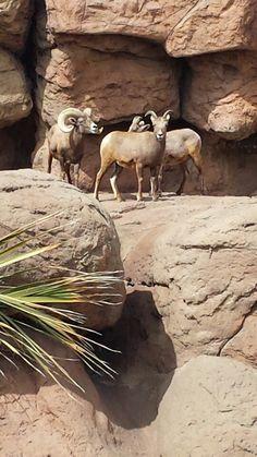 Arizona-Sonora Desert Museum (Tucson, AZ)
