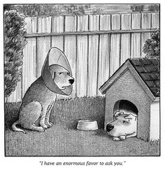 Hilarious Memes One of the best New Yorker cartoons was a rejected one. New Yorker Cartoons, Funny Pictures Tumblr, Best Funny Pictures, Dog Memes, Memes Humor, Dog Funnies, Funny Sites, The New Yorker, Funny Pranks