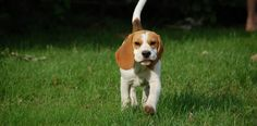Dog Training Tips - http://how-to-train-a-dog.com/dog-training-tips/