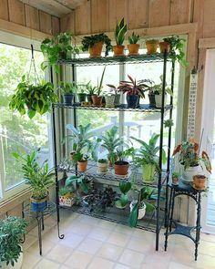 🌿My big sunroom #plantshelfie . It is much different now than it was earlier this year. I'll be in big trouble in the late summer/early…