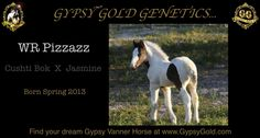 Cushti Bok, and Jasmine.....Pizzazz. To learn more about these wonderful genetics please visit GypsyGold.com