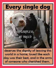 YES, EVERY SINGLE DOG. Thanks to Michelle Bullock, who shared this and feels strongly, as do I -- that more needs to be done to put an end to animal abuse.