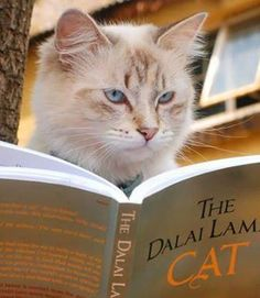 The Dalai Lama's Cat, a most wonderful book, part of a series I reviewed.