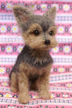 Super lijkt op Cairn terrier