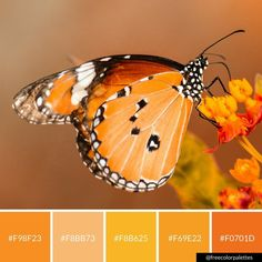 Orange   Vibrant   Fall  Color Palette Inspiration.   Digital Art Palette And Brand Color Palette.