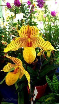 Orchids - Orquídeas - Comunidad - Google+