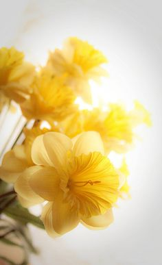 #yellow color brings inspiration to the soul!