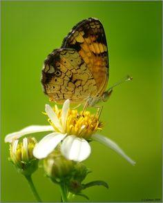 Pretty ~ Butterfly