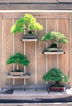 Image result for bonsai trees on the wall