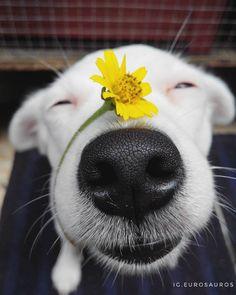 Cães são enfeitados e adorados em festival no Nepal