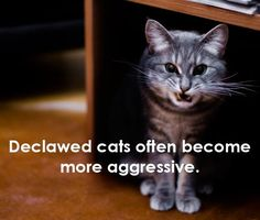 Many people think that declawed cats are safer around babies, but in fact, the lack of claws makes many cats feel so insecure that they tend to bite more often as a means of self-protection. Who wouldn't be cranky if you're in agony and pain 24/7 dumbass?