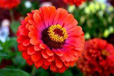 Resultado de imagen de flores de otoño