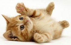 ceainarie+cu+pisici.jpg (494×315)