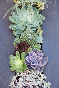 This combination of succulents is beautiful!