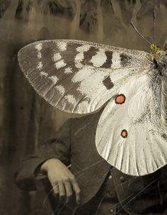 101: Parnassius apollo by Jo Whaley