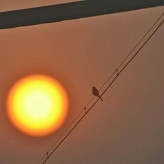 || out of focus || #overlay #doubleexposure #edited with #picsart #bird #silhouette #sky #skies #sky_hub #sun #sunrise #morning #lookup #serene #scenic #minimal #minimalism #minimalove #ig_minimalshots #rsa_minimal #jj_minimalism #learnminimalism #lessismore #nothingisordinary #pune #nikon by shreny.ms