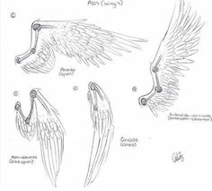 Wing reference pt. 1 ~<3