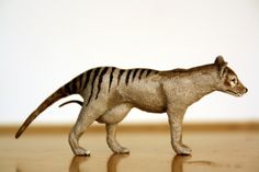 Female thylacine by Joan