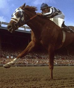 Secretariat flat out Magnificent Beasts, Faster Horses, The Great Race, Triple Crown Winners, Sport Of Kings, Thoroughbred Horse, Racehorse, All The Pretty Horses, Horseback Riding