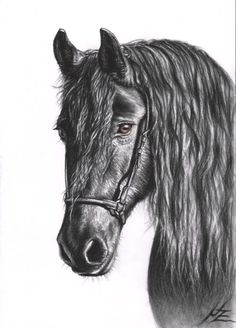 Friesian Horse Portrait, charcoal drawing