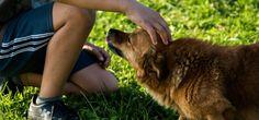 7 motivos porque você ainda não adotou um cachorro de rua - Blog Fareja Pet   Fareja Pet