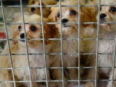 Charities And Government Join Scottish Campaign To Shut Down Puppy