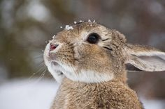 Bunny Rabbit with snow on its face All Gods Creatures, Cute Creatures, Beautiful Creatures, Animals Beautiful, Animals And Pets, Baby Animals, Cute Animals, Animals Images, Tier Fotos