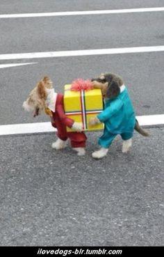 Creative dog costume.  #dogs