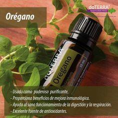 Propiedades aceite orégano