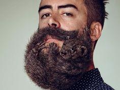 Et s'il était temps de raser votre barbe ? C'est en tout cas le message qu'une marque de rasoir semble vouloir faire passer à travers cette campagne publicitaire. DGS vous présente ces hommes dont la barbe est devenu le domicile de rongeurs à poils longs. - Fouine-noire