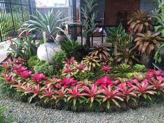 Brilliant Front Yard Landscaping With Bromeliads Ideas Awesome 50 Brilliant Front Yard Landscaping With Bromeliads Ideas.Awesome 50 Brilliant Front Yard Landscaping With Bromeliads Ideas. Tropical Garden, Tropical Landscaping, Front Yard Landscaping Design, Plants, Bromeliads Garden, Beautiful Flowers, Landscaping With Rocks, Landscaping Plants, Tropical Landscape Design