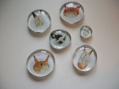6 Funny Cats Glass Magnets by BadCatCraft on Etsy