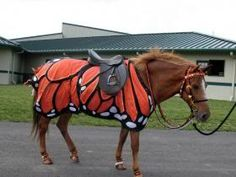 CKRH Annie with butterfly costume. Horse costume by Shirley Gentry