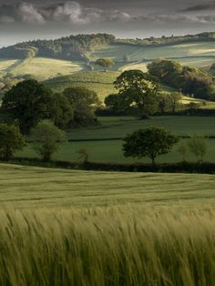 The Rolling Hills of Devon, England.                                                                                                                                                                                 More