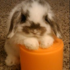 too freakin adorable. and i don't even like rabbits!