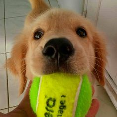 If this pup ask you to play with him, would you ?   BIG SALE !! Check our bio now    Click the link in the bio NOW   Like and tag your friends   : @jackie_thegolden
