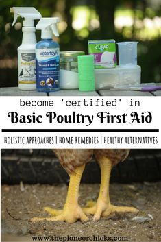 Chicken First Aid Crash Course- learn how to treat common ailments using Vetericyn vet wrap anti-biotic ointment and other natural remedies like Epsom salts elderberry and silver. Raising Backyard Chickens, Backyard Farming, Keeping Chickens, Pet Chickens, Holistic Remedies, Natural Remedies, Herbal Remedies, Cold Remedies, First Aid Tips