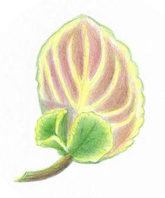 Saintpaulia, Flower Pictures, Houseplants, Indoor Plants, Bloom, African, Flowers, Artist, Artwork