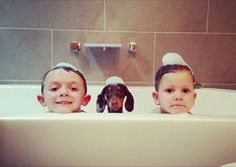 one of these things is not like the other. . . #Dachshund