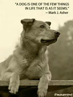 A dog is one of the few things in life that is as it seems.