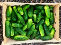 The Most Delicious Moments from NYC's Famous Pickle Festival #angelsfoodparadise