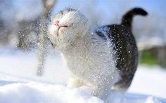 Sacudo o inverno de mim, sacudindo o gato, gato de inverno Vetor