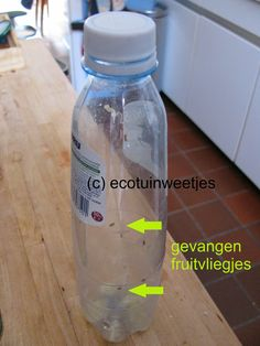 Fruitvliegjes vangen met een PET-fles. Ecologisch en diervriendelijk!